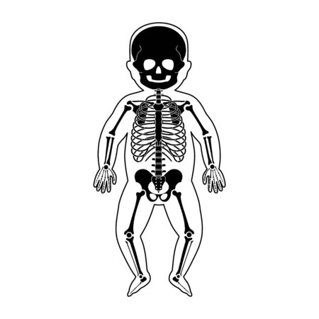 Baby skeleton anatomy in front view. Vector isolated flat illustration of human newborn child skull and bones in body. Halloween, medical, educational or science banner Vector Illustration