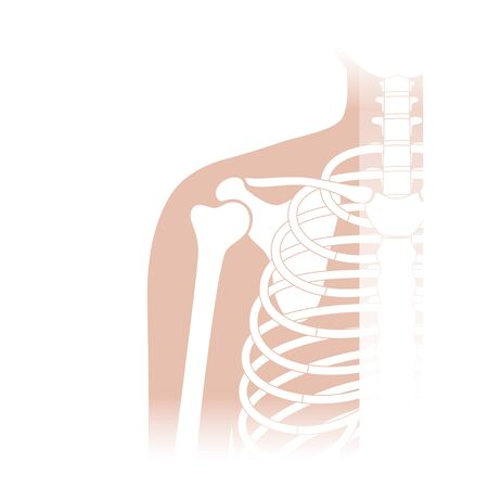 Human shoulder joint anatomy. Bones diagram. Vector flat concept illustration. Isolated on white background. Medical, educational and science banner