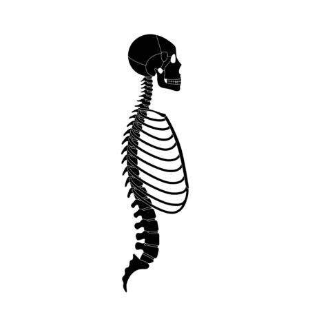Human man skeleton anatomy in profile view. Vector isolated flat illustration of skull and bones. Halloween, medical, educational or science banner