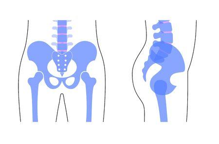 Anatomie du bassin humain. Os principaux du bassin - sacrum, ilion, coccyx, fémur. Vue de face et de côté. Illustration vectorielle isolée sur fond blanc. silhouette squelette. Bannière médicale et éducative