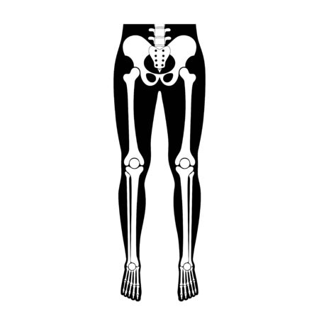 Human leg bones anatomy. Hip, knee, pelvis,femur, foot, toe, joint symbol. Vector flat concept illustration. Isolated on white background. Medical, educational and science banner