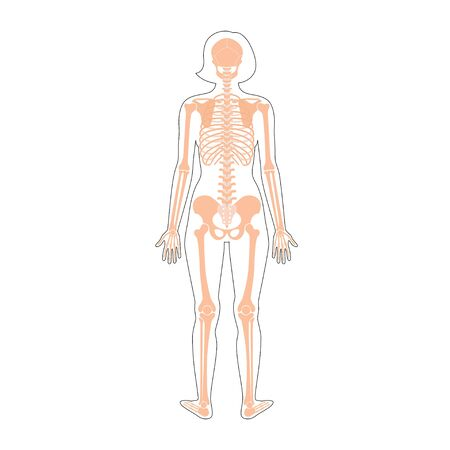 Woman skeleton anatomy in front, profile and back view. Vector isolated flat illustration of human skull and bones in female body. Halloween, medical, educational or science banner