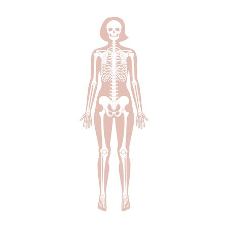 Woman skeleton anatomy in front view. Vector isolated flat illustration of human skull and bones in female body. Halloween, medical, educational or science banner