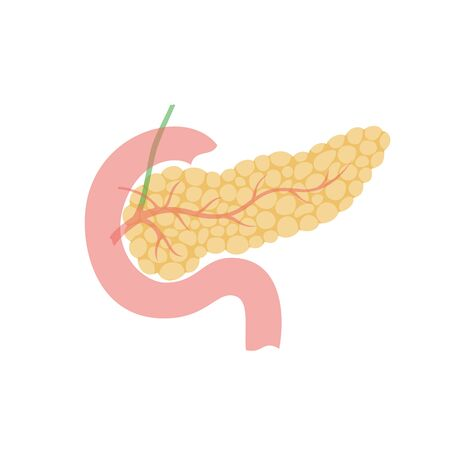 Vector isolated illustration of pancreas anatomy. Human digestive system icon. Healthcare medical center, surgery, hospital, clinic, diagnostic  . Internal organ symbol poster design. Donation