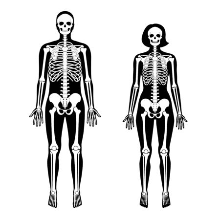 Woman and man skeleton anatomy in front view. Vector black isolated flat illustration of human skull and bones in body. Halloween, medical, educational or science banner