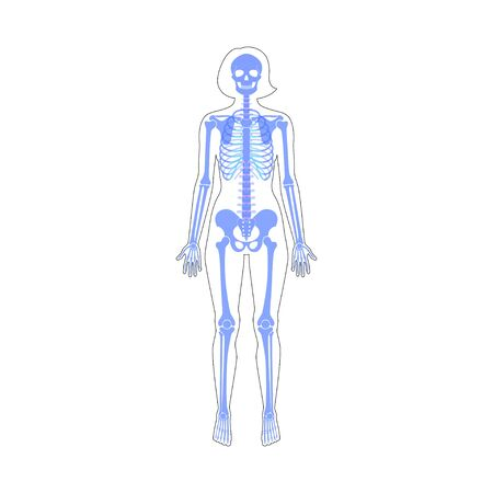 Woman skeleton anatomy in front view. Vector isolated flat illustration of human skull and bones in female body. Halloween, medical, educational or science banner Illustration