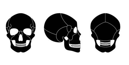 Human skull anatomy. Flat vector medical illustration isolated. Structure of facial skeleton with main parts. Cranium diagram with part bones. Front, back and side view. Educational, science poster Illustration