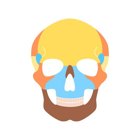 Human skull anatomy. Flat vector medical illustration isolated. Structure of facial skeleton with main parts. Cranium diagram with part bones. Front anterior view. Educational, science poster