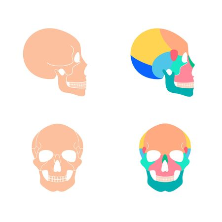 Human skull anatomy. Flat vector medical illustration isolated. Structure of facial skeleton with main parts. Cranium diagram with part bones. Front and side view. Educational, science poster