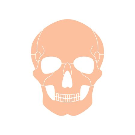 Human skull anatomy. Flat vector medical illustration isolated. Structure of facial skeleton. Cranium diagram. Educational, science poster. Front anterior view Illustration