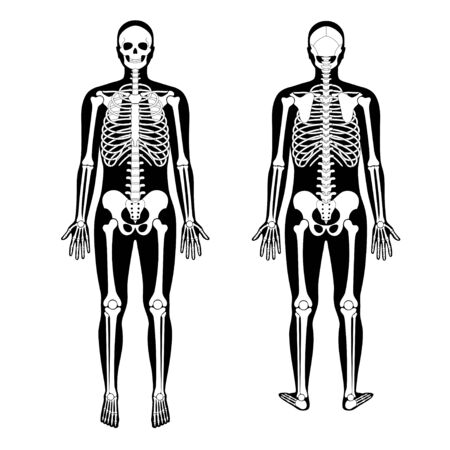 Human man skeleton anatomy Illustration