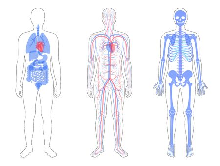 Internal structure of human body. Ilustrace
