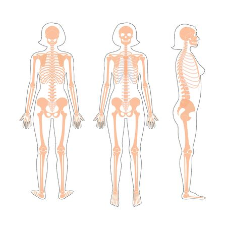 Woman skeleton anatomy Illustration