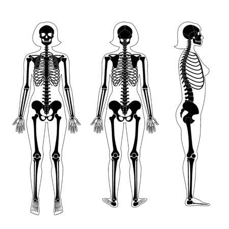 Woman skeleton anatomy