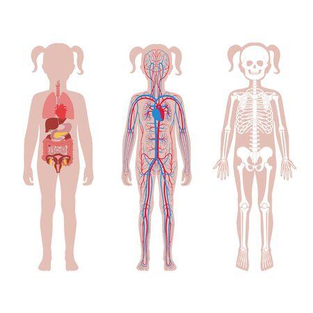 Structure interne du corps de l'adolescente.