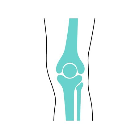 Knee Joint and meniscus anatomy