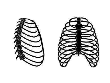 Anatomie de la cage thoracique humaine