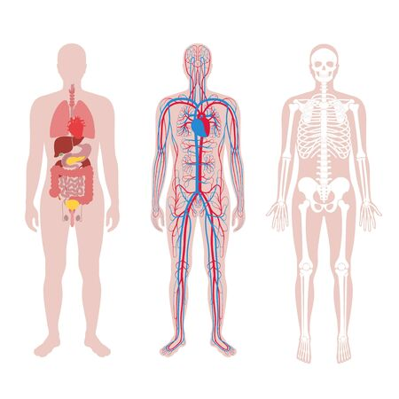 Internal structure of human body.