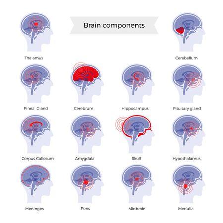 Pain Brain Illustration Vecteurs
