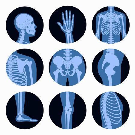 Skeleton x ray Ilustracje wektorowe