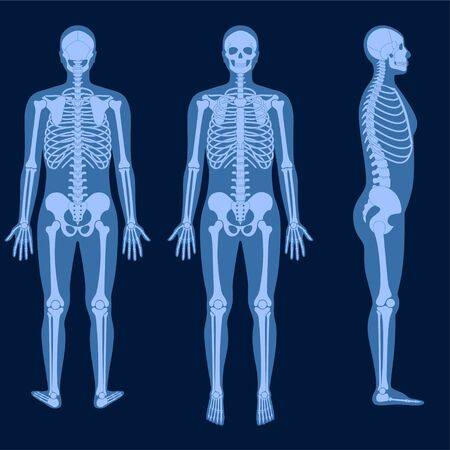 Skeleton x ray Stock Illustratie