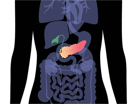 Pancreas an human body Иллюстрация