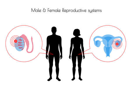 Vector isolated illustration of pain and inflammation in reproductive system in woman and man silhouette. Isolated black uterus, cervix, ovary and other organs icon in body.