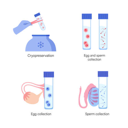 Woman and man egg cell cryopreservation. Embryo icon in tube. Sperm and ovum. Fertilisation, gynecology and gene testing. Human sexual reproductive system. Medical poster. IVF vector illustration.