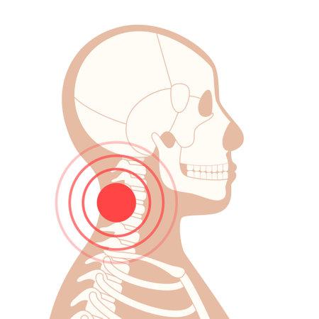 Human bones concept
