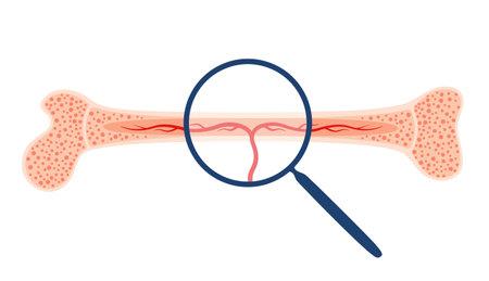 Human internal organs Vector Illustration