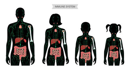 Lymphatic System Concept