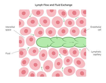 Lymphatic vessel concept