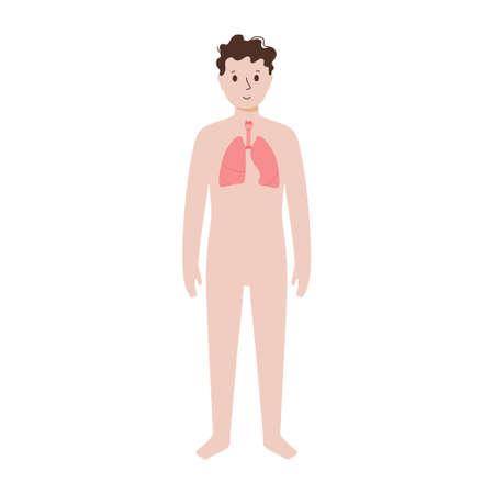 Internal organs in male body
