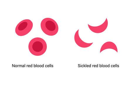 Blood structure concept illustration