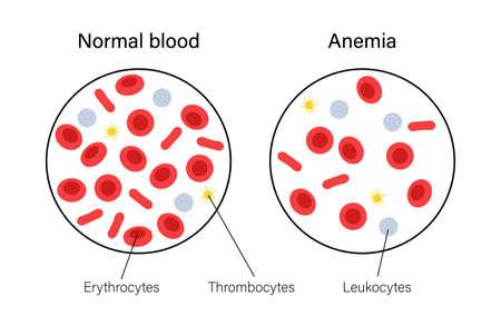 Blood structure concept illustration Vector Illustration