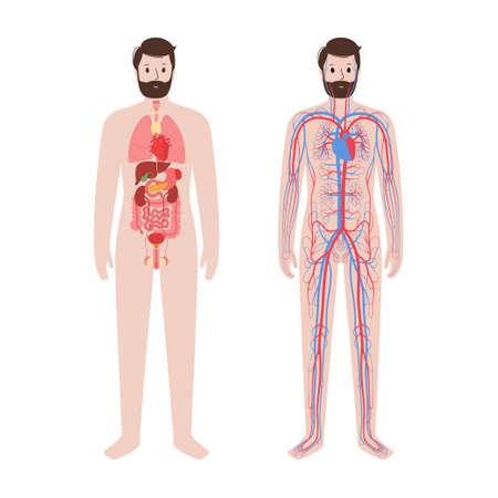 Circulatory system concept  イラスト・ベクター素材