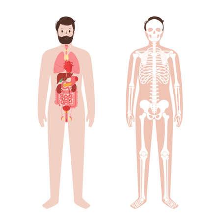 Organs and skeleton