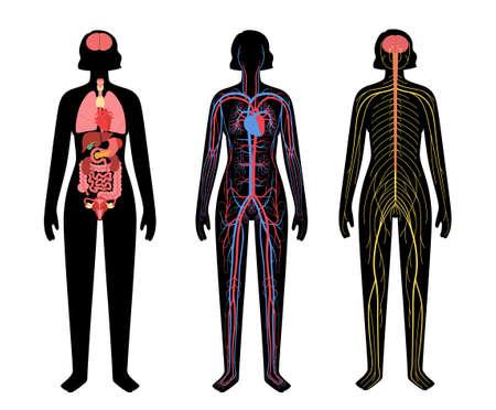 Human body systems 向量圖像