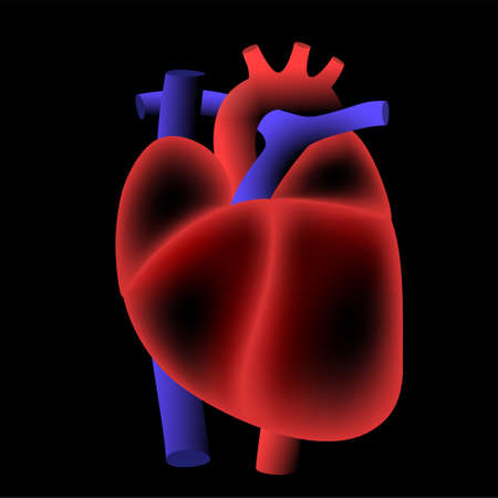 Human heart illustratiion 向量圖像