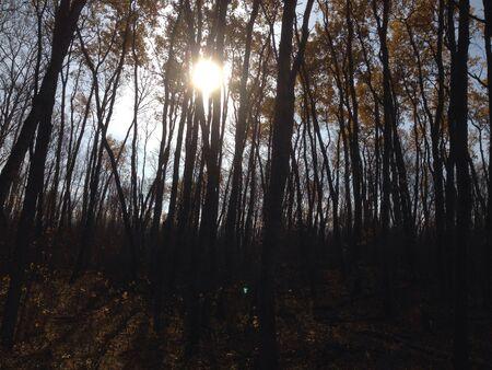 Sun shining through the poplars on a fall day 版權商用圖片