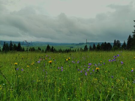 Poland Pieniny. A flowery meadow with storm clouds in the background.
