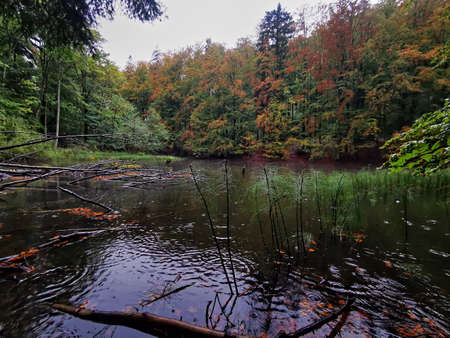 Bieszczady Lakes Duszatynskie. Autumn in the Bieszczady Mountains. Autumn colors in the forest.