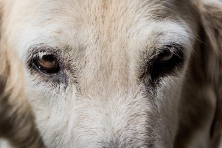 faithful: Eyes of a faithful dog Stock Photo