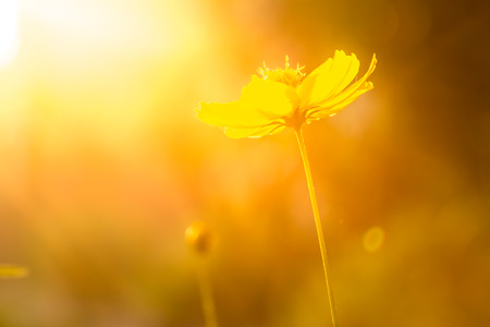 sunsets: Light golden sunsets and flowers. Stock Photo