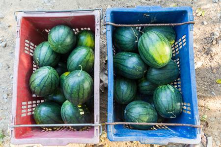 fruit trade: Fruit trade Stock Photo
