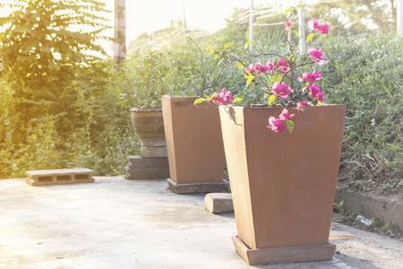 ollas de barro: Las ollas de barro de flores Foto de archivo