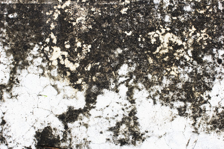surface: Cement surface for background.