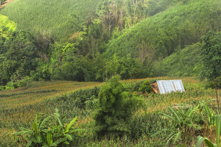 deforested: The deforestation for cultivation of agriculture on the mountain. Stock Photo