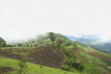 decimated: The deforestation for cultivation of agriculture on the mountain. Stock Photo