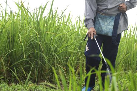 Wazig pesticide in de landbouw wassen en biologisch voedsel op de berg groeien.